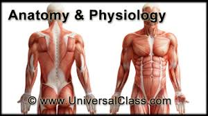 Survey Of Human Anatomy And Physiology Online Course Anatomy And Physiology 101 Ceu Certificate