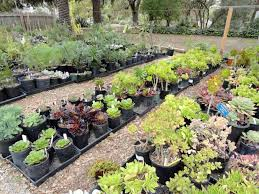 100 flower plants for sale 1008977 601213379902786
