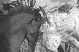 papier peint chevaux pour chambre papiers peints posters stickers pour les murs tableaux sur