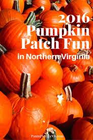 2016 pumpkin patch fun in northern virginia fun in fairfax va