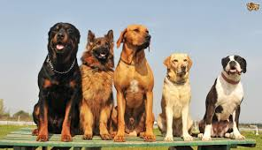 types of dogs different breeds of dogs with pictures widescreen hd wallpapers