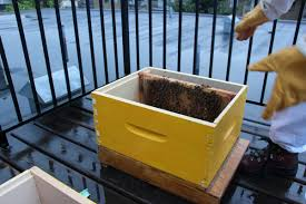 a home for me and my bees modern farmer