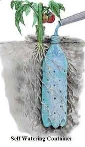 underground self watering recycled bottle system potted