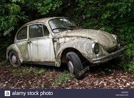 volkswagen cars beetle junk car old vw beetle left in the woods near gardone lombardy