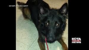 belgian sheepdog crossword pine ridge police bid farewell to fallen k 9 officer