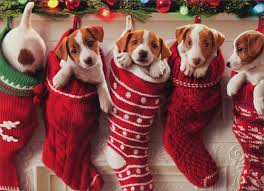 funny christmas cards with dogs chrismast cards ideas