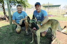 belgian shepherd kzn interview with grant melville on climb for k9 u2039 sa mountain