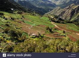 fields mercedes terraced fields showing crops in the mercedes mountains tenerife