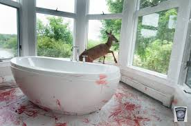 deer creates bloody scene after crashing through window in cohasset