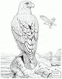 coloring pages birds eagle harpy eagle colorpages7 com