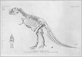 the project gutenberg ebook of dinosaurs by william diller matthew