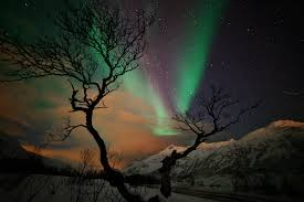 Tree Lights Landscape by Stars Night Mountains Winter Snow Tree Northern Lights F Wallpaper