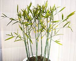 772 best artificial trees and shrubs images on shrubs