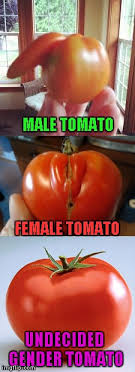 Tomato Meme - i guess it s a good thing my kitchen is unbiased imgflip