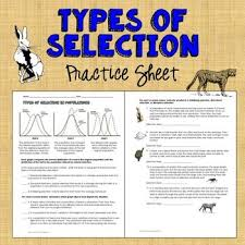 best 25 natural selection ideas on pinterest biology classroom