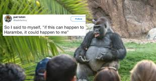 Gorilla Memes - the internet s hottest new meme is this gorilla giving a ted talk