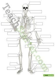 human skeleton worksheet grade4 worksheets releaseboard free