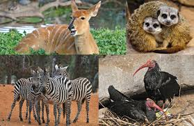 sle resume journalist position in kzn wildlife cing welcome to hashalom the monthly journal of the kwazulu natal