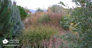 gorgeous grasses for fall landscapes