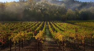 Wildfire Telluride Co by Travel To Sonoma County Sonoma County Discover America