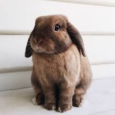 Emma Freud Rabbit Hutch 676 Best Bazaar Loves Bunnies Images On Pinterest Bunny Rabbits