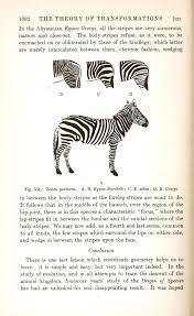 animal u2013 zebra u2013 evolution of stripes vintage printable at