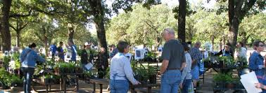 native north texas plants plant sale n central chapter npsot