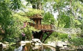 tree house the tiny