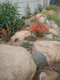 native plants in arizona paintbrush gardens llc native landscapes xeriscapes