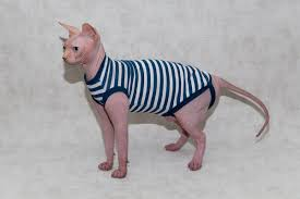 sphynx sweaters sphynx cat clothing shirt for cat dress for cat sphynx