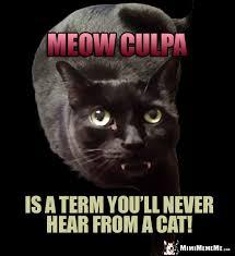 Lawyer Cat Meme - lawyer cat joke mea culpa is a term you ll never hear from a cat