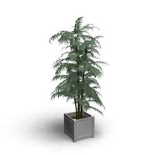 indoor plant design and decorate your room in 3d