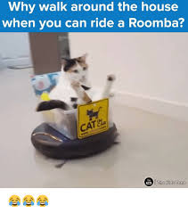 25 best memes about roomba cat roomba cat memes