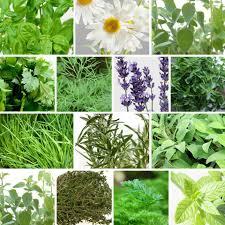 Easy Herbs To Grow Inside Tower Garden Home Facebook