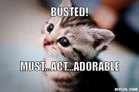 Funny Kitten Meme - funny kitten memes 9