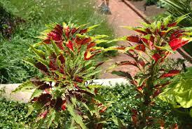 riverbanks botanical garden aman0219