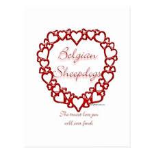 belgian sheepdog merchandise love belgian sheepdogs postcards zazzle
