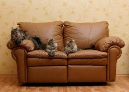 How To Clean A Leather Sofa Cleaning Urine Stains And Odors From Leather Furniture Thriftyfun