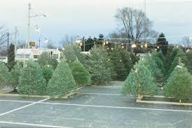 100 cut christmas trees u cut christmas trees near me