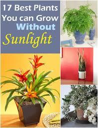 plants that grow without sunlight gardens pinterest sunlight