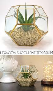 How To Make A Succulent Planter by Hexagon Succulent Terrarium Dream A Little Bigger