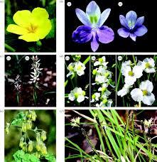 understanding plant reproductive diversity philosophical