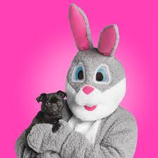 petsmart launches easter collection so u201cevery bunny u201d can join in