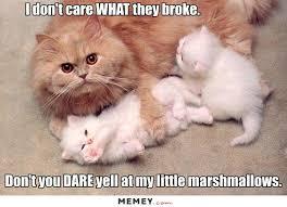 Kittens Memes - kitten memes funny kitten pictures memey com page 2