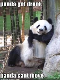 Pick Up Line Panda Meme - beer panda meme panda best of the funny meme