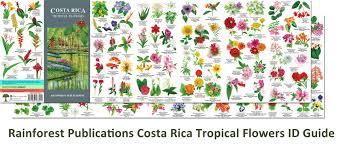 Identify Flowers - identify flower flower inspiration