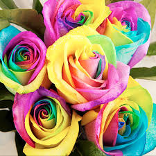 Rainbow Home Decor by 20pcs Colorful Rainbow Rose Valentine Lover Flower Seeds Garden