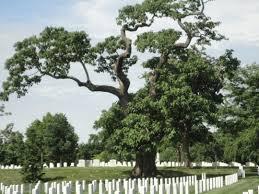 Arlington Cemetery Map Arlington National Cemetery Tree Walks Treestewards Org