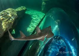 halloween image two oceans aquarium cape town south africa exhibits