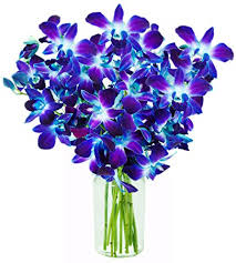 blue dendrobium orchids kabloom blue sapphire orchid bouquet of 10